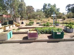 16 kitchen garden